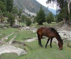 Fairy Meadows and Hushe Gondogoro La Trek (1)
