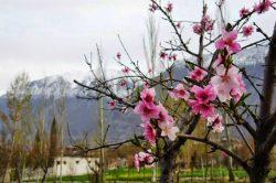 Hunza Blossom Tour Tour